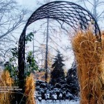 porady_roze_zabezpieczenie_roz_na_zime15