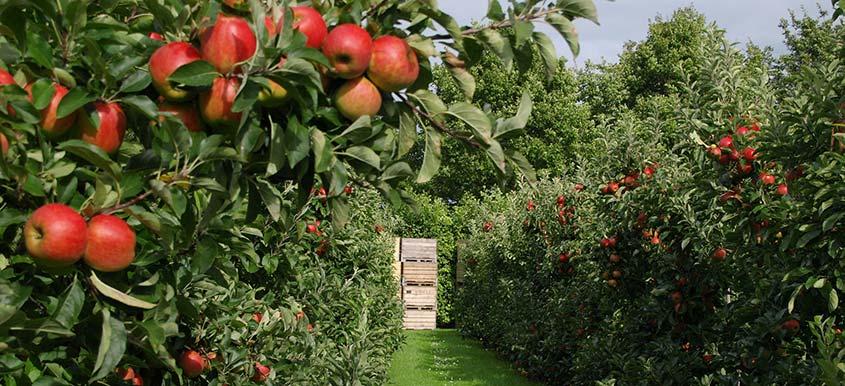 Zakładanie sadu w przydomowym ogrodzie