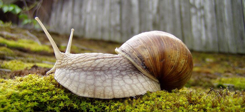 Ochrona upraw przed ślimakami