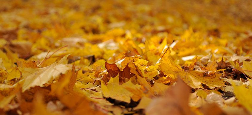 Usuwanie opadłych liści z ogrodu
