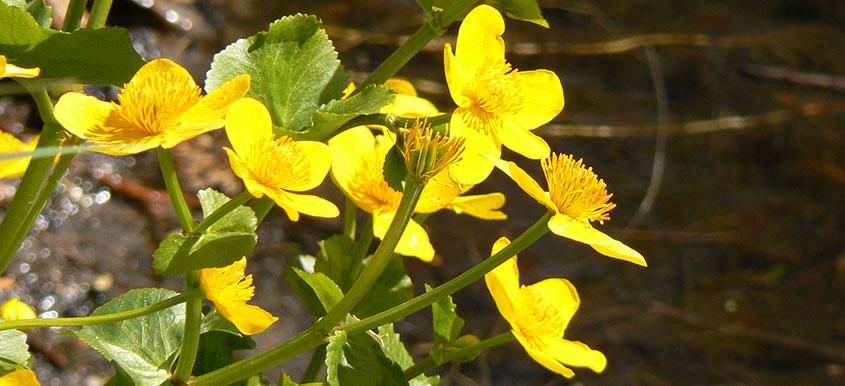 Jakie rośliny wiosenne warto posiadać