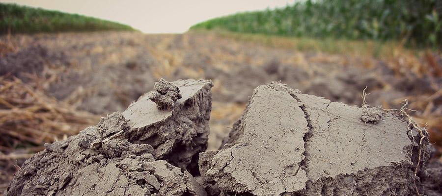Kwasowość i zasadowość gleby