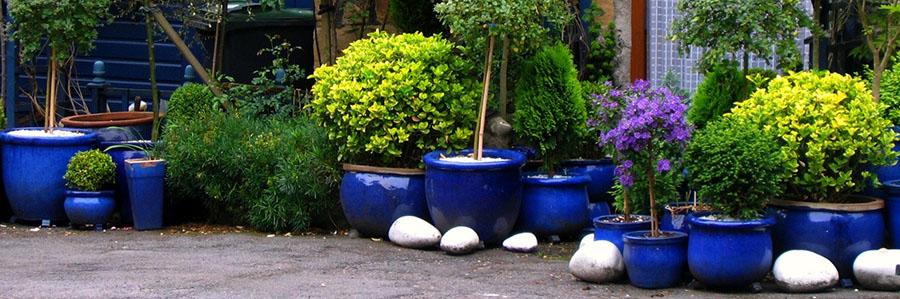 Przydomowe Ogrody Jak Zabezpieczyć Rośliny W Donicach Przed Mrozem