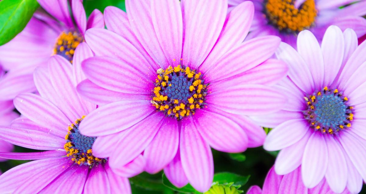 kwiaty_22052015-8